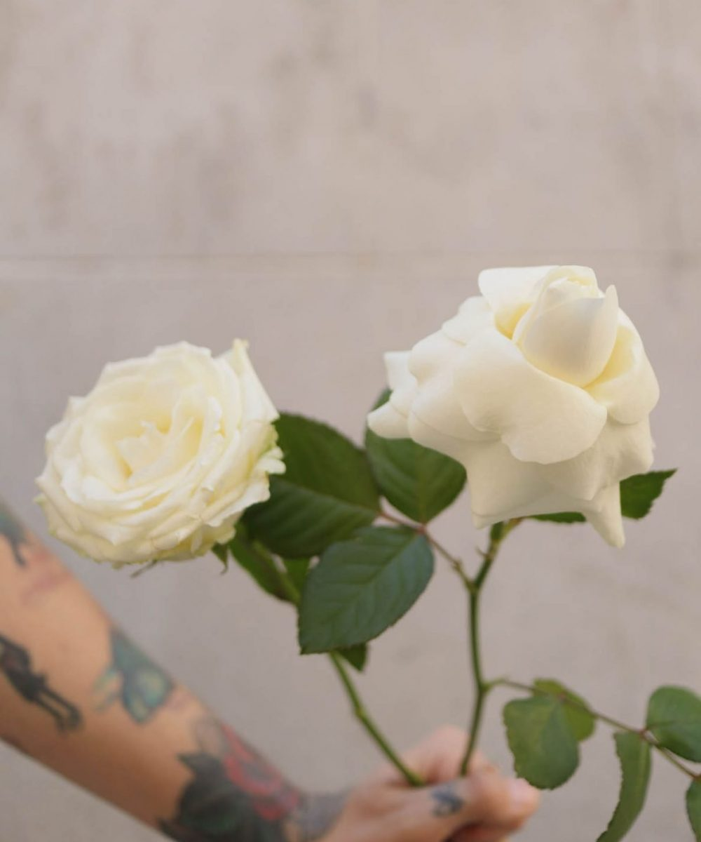 White rose. Left: Classic style. Right: Inverted® style.
